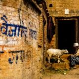 Nepal - Man & his sheep