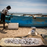 Sri Lanka - Galle - Fish market