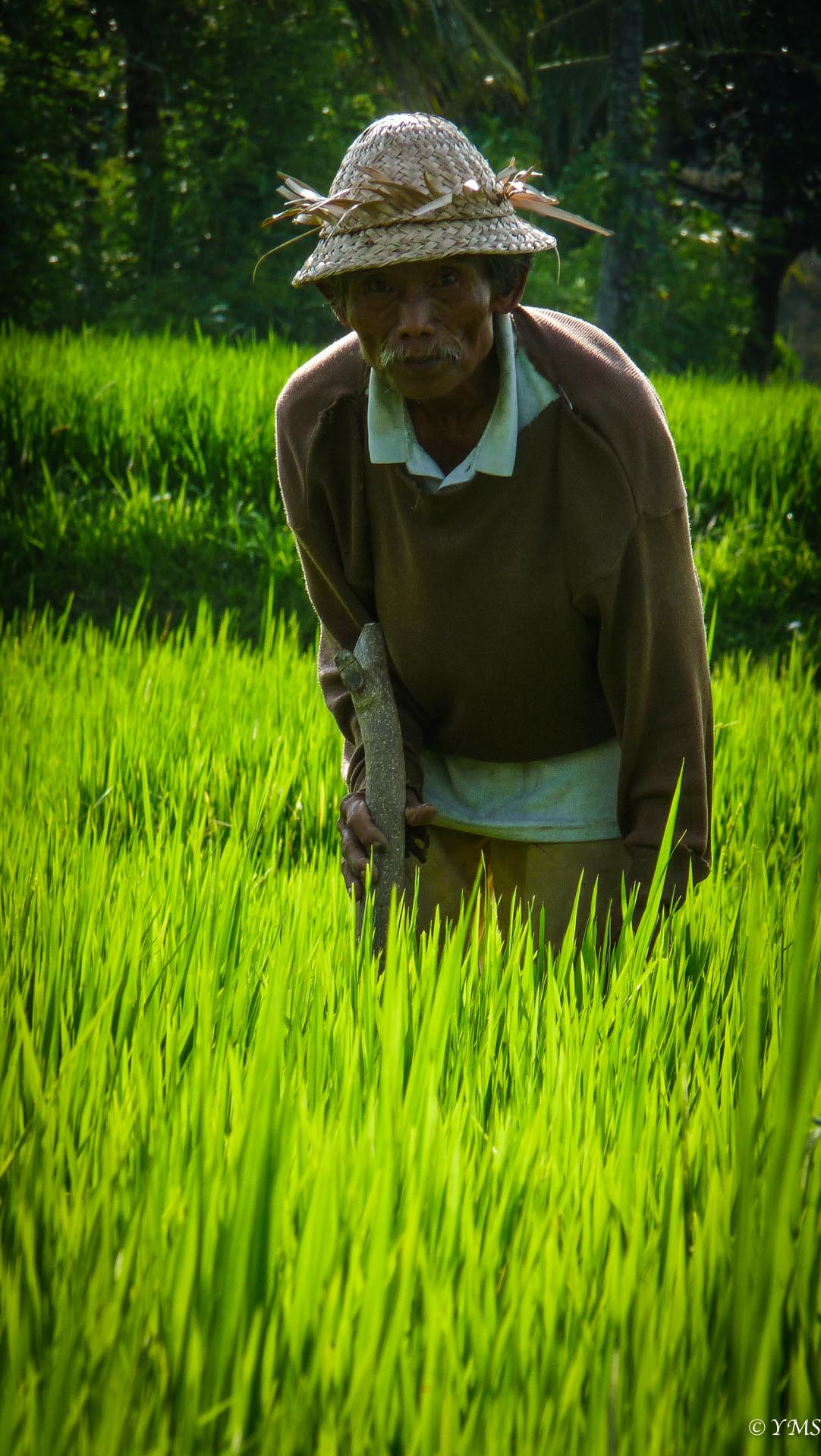 Bali - Man in rice field
